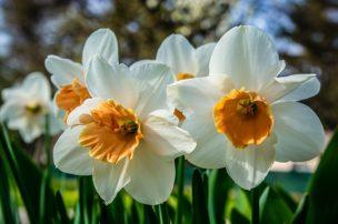 ほったらかし で 毎年 咲く 花