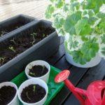 ベランダで野菜を栽培!冬に育てるおススメ野菜3選!