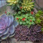 多肉植物が枯れる原因はアレだった!しっかり対策を探ろう!