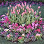 春の寄せ植え!組み合わせのおススメときれいに見せるコツ!