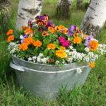 冬の花でプランターを色とりどりに!変わり種9選!
